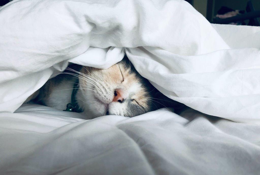 5 Manfaat Kesehatan dari Tidur yang Cukup